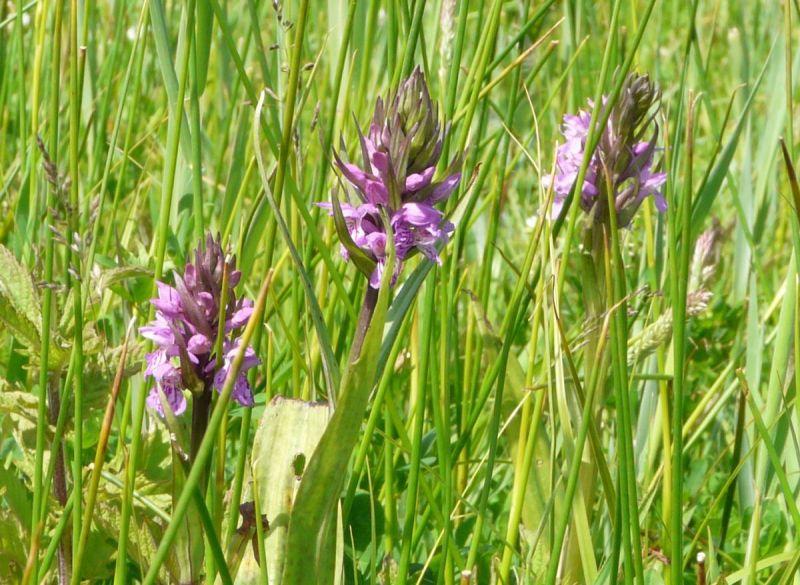orchideeen713
